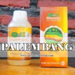 Agen QnC Jelly Gamat Palembang Sumatera Selatan